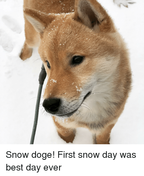 Doge, Best, and Snow