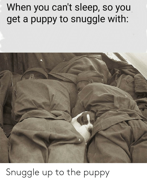 Puppy: Snuggle up to the puppy