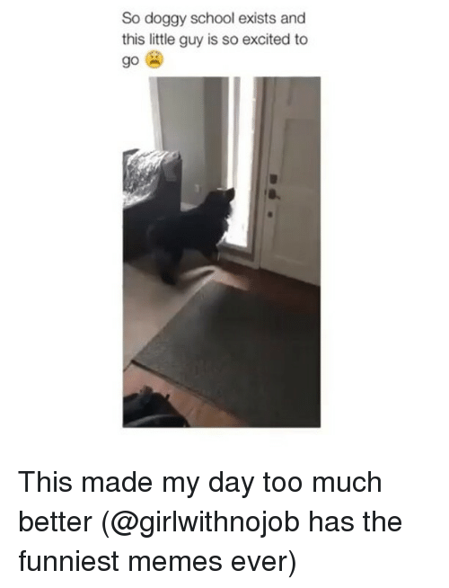 Funny, Memes, and School: So doggy school exists and  this little guy is so excited to  go This made my day too much better (@girlwithnojob has the funniest memes ever)