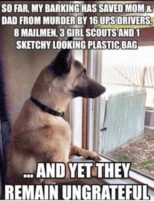 Dad, Dank, and Girl Scouts: SO FAR, MY BARKING HAS SAVED MOM&  DAD FROM MURDER BY 16 UPS DRIVERS,  8 MAILMEN, 3 GIRL SCOUTS AND 1  SKETCHY LOOKING PLASTIC BAG  UPS DRIVERS  ANDYET THEY  REMAIN UNGRATEFUL