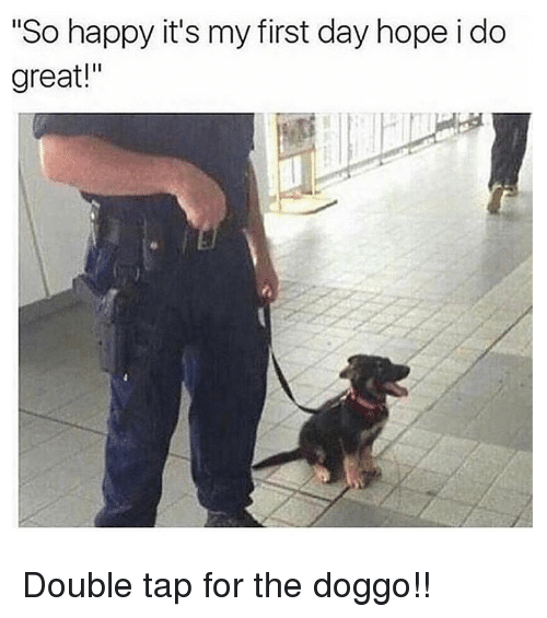 """Memes, Happy, and Hope: So happy it's my first day hope i do  great!"""" Double tap for the doggo!!"""