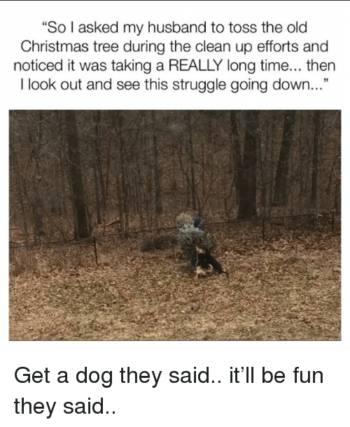 """Christmas, Memes, and Struggle: """"So I asked my husband to toss the old  Christmas tree during the clean up efforts and  noticed it was taking a REALLY long time... then  I look out and see this struggle going down..."""" Get a dog they said.. it'll be fun they said.."""