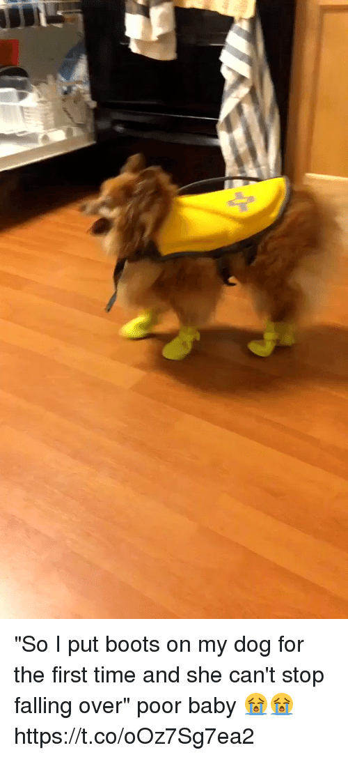 """Falling Over: """"So I put boots on my dog for the first time and she can't stop falling over"""" poor baby 😭😭 https://t.co/oOz7Sg7ea2"""