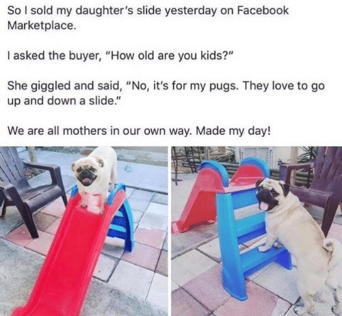 "Facebook, Love, and Kids: So I sold my daughter's slide yesterday on Facebook  Marketplace.  I asked the buyer, ""How old are you kids?""  She giggled and said, ""No, it's for my pugs. They love to go  up and down a slide.""  We are all mothers in our own way. Made my day!"