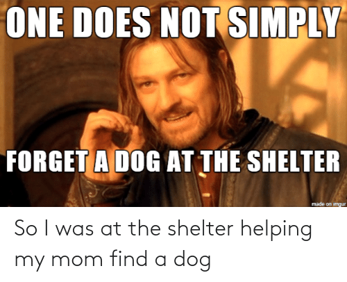 helping: So I was at the shelter helping my mom find a dog