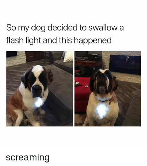 Flash, Dog, and Light: So my dog decided to swallow a  flash light and this happened screaming