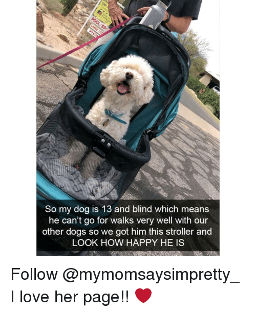 Dogs, Love, and Memes: So my dog is 13 and blind which means  he can't go for walks very well with our  other dogs so we got him this stroller and  LOOK HOW HAPPY HE IS Follow @mymomsaysimpretty_ I love her page!! ❤