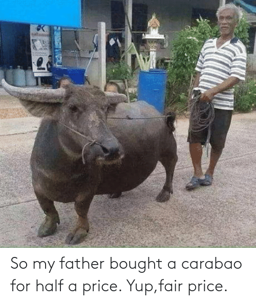 yup: So my father bought a carabao for half a price. Yup,fair price.