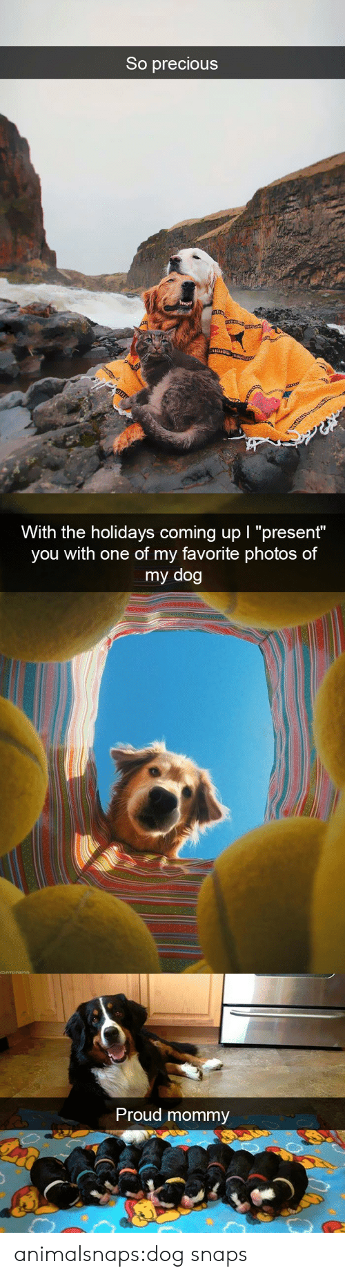 "Precious, Target, and Tumblr: So precious   With the holidays coming up I ""present""  you with one of my favorite photos of  my dog   Proud mommy animalsnaps:dog snaps"