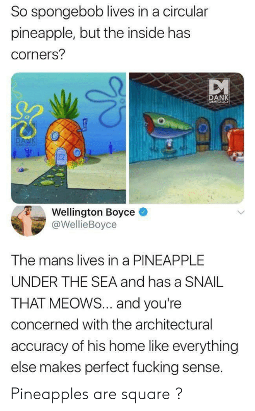 Memeology: So spongebob lives in a circular  pineapple, but the inside has  corners?  DANK  MEMEOLOGY  DANK  MEMICIOG  Wellington Boyce  @WellieBoyce  The mans lives in a PINEAPPLE  UNDER THE SEA and has a SNAIL  THAT MEOWS... and you're  concerned with the architectural  accuracy of his home like everything  else makes perfect fucking sense. Pineapples are square ?