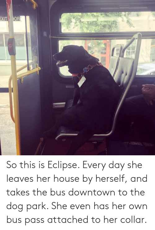 bus: So this is Eclipse. Every day she leaves her house by herself, and takes the bus downtown to the dog park. She even has her own bus pass attached to her collar.