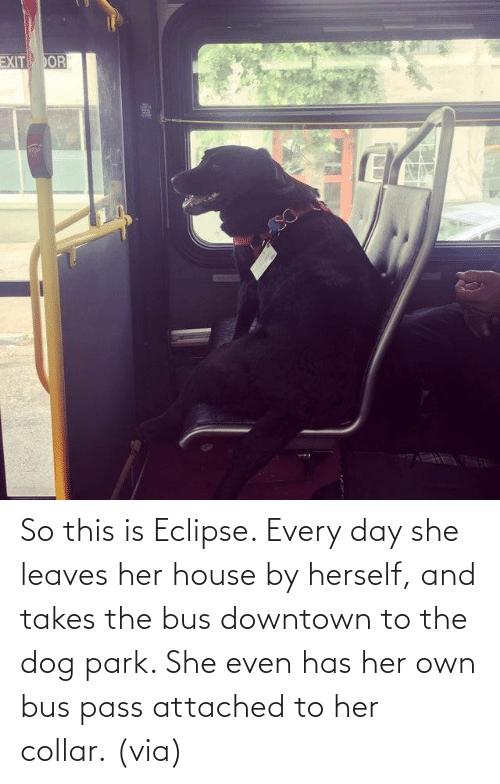 Herself: So this is Eclipse. Every day she leaves her house by herself, and takes the bus downtown to the dog park. She even has her own bus pass attached to her collar. (via)