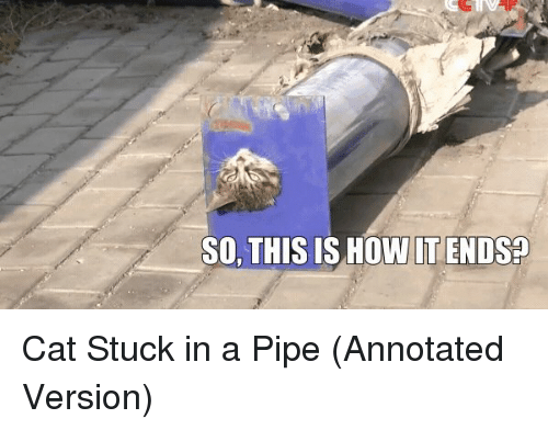 Cats, Funny, and Gif: SO, THIS IS HOW IT ENDS Cat Stuck in a Pipe (Annotated Version)