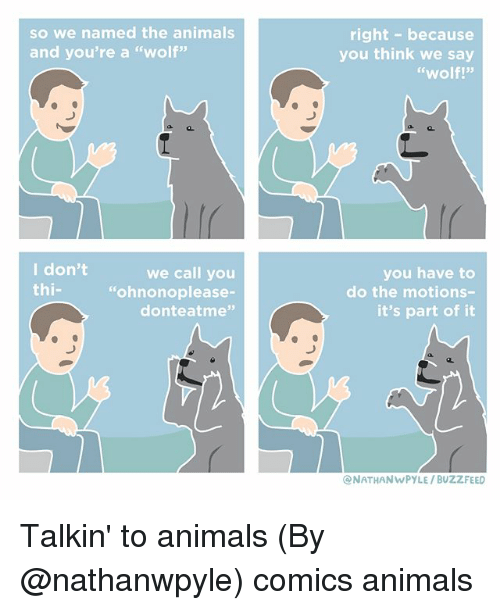 """Animals, Memes, and Buzzfeed: so we named the animals  and you're a """"wolf""""  right- because  you think we say  """"wolf!""""  I don't  thi-  we call you  """"ohnonoplease-  donteatme""""  you have to  do the motions-  it's part of it  NATHANWPYLE/ BUZZFEED Talkin' to animals (By @nathanwpyle) comics animals"""