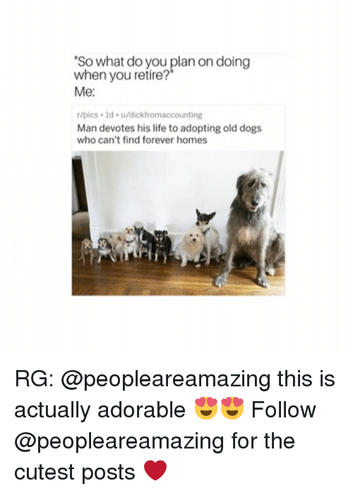 Dogs, Life, and Forever: So what do you plan on doing  when you retire?  Me:  r/pics 1d. u/dickfromaccounting  Man devotes his life to adopting old dogs  who can't find forever homes RG: @peopleareamazing this is actually adorable 😍😍 Follow @peopleareamazing for the cutest posts ❤️