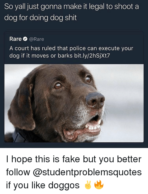 Fake, Police, and Shit: So yall just gonna make it legal to shoot a  dog for doing dog shit  Rare @Rare  A court has ruled that police can execute your  dog if it moves or barks bit.ly/2hSjXt7 I hope this is fake but you better follow @studentproblemsquotes if you like doggos ✌️🔥