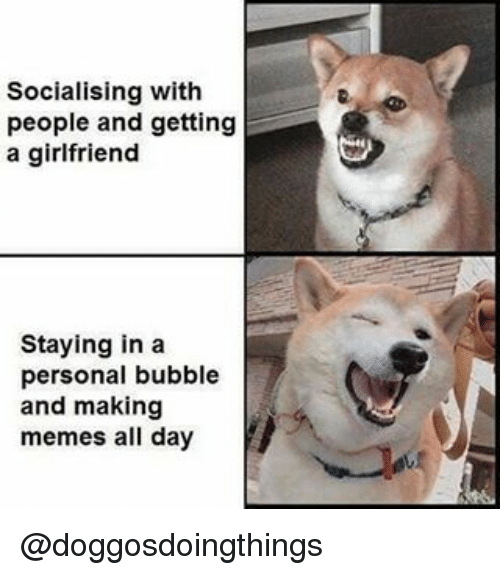 Making Meme: Socialising with  people and getting  a girlfriend  Staying in a  personal bubble  and making  memes all day @doggosdoingthings