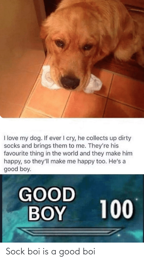 boi: Sock boi is a good boi