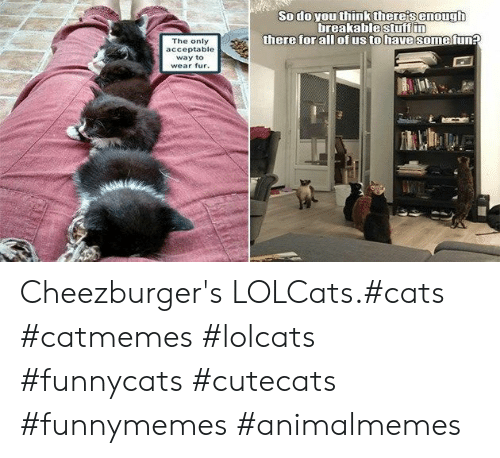 Cats, LOLcats, and Fun: Sodo you think there's enough  breakablestuff in  there for all ofus to have some fun?  The only  acceptable  way to  wear fur. Cheezburger's LOLCats.#cats #catmemes #lolcats #funnycats #cutecats #funnymemes #animalmemes