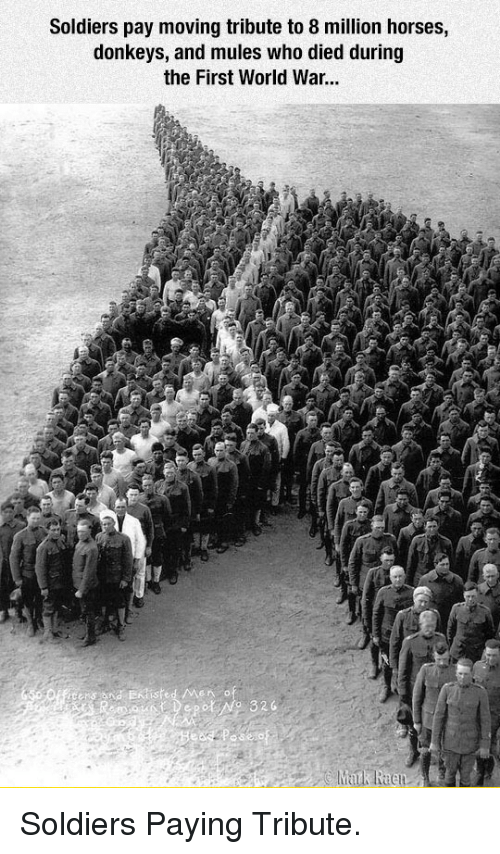 donkeys: Soldiers pay moving tribute to 8 million horses,  donkeys, and mules who died during  the First World War... <p>Soldiers Paying Tribute.</p>