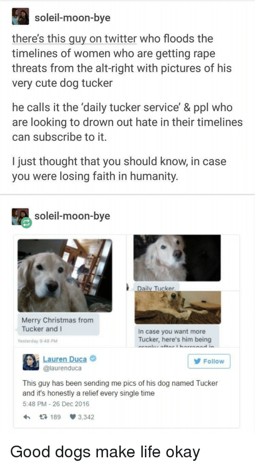 Christmas, Cute, and Dogs: soleil-moon-bye  there's this guy on twitter who floods the  timelines of women who are getting rape  threats from the alt-right with pictures of his  very cute dog tucker  he calls it the 'daily tucker service' & ppl who  are looking to drown out hate in their timelines  can subscribe to it.  I just thought that you should know, in case  you were losing faith in humanity.  soleil-moon-bye  Daily Tucker  Merry Christmas from  Tucker and I  In case you want more  Tucker, here's him being  Yesterday 9:48 PM  Lauren Duca  @laurenduca  Follow  This guy has been sending me pics of his dog named Tucker  and it's honestly a relief every single time  5:48 PM 26 Dec 2016  189 3,342 Good dogs make life okay