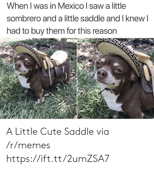 Cute, Memes, and Saw: sombrero and a little saddle and I knew  SEST  had to buy them for this reason  When I was in Mexico I saw a little  ESESTS A Little Cute Saddle via /r/memes https://ift.tt/2umZSA7
