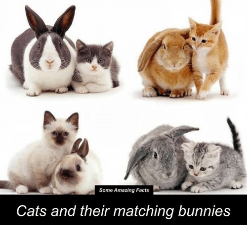 Bunni: Some Amazing Facts  Cats and their matching bunnies