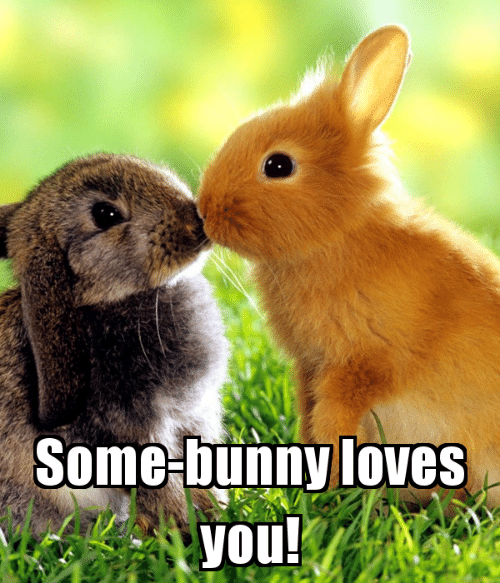 Memes, 🤖, and Bunny: Some-bunny loves  you!