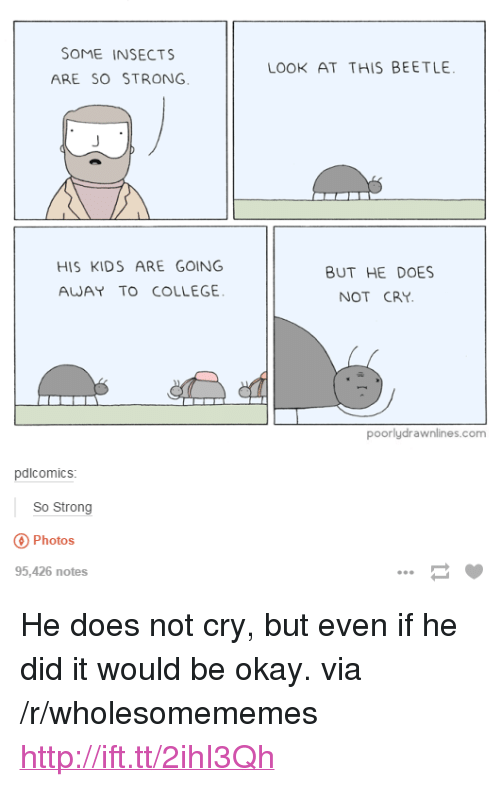 "College, Http, and Kids: SOME INSECTS  ARE SO STRONG  LOOK AT THIS BEETLE  HIS KIDS ARE GOING  AWAY TO COLLEGE  BUT HE DOES  NOT CRY  poorlydrawnlines.com  pdlcomics  So Strong  Photos  95,426 notes <p>He does not cry, but even if he did it would be okay. via /r/wholesomememes <a href=""http://ift.tt/2ihI3Qh"">http://ift.tt/2ihI3Qh</a></p>"