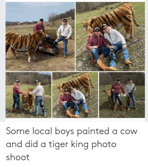 photo: Some local boys painted a cow and did a tiger king photo shoot