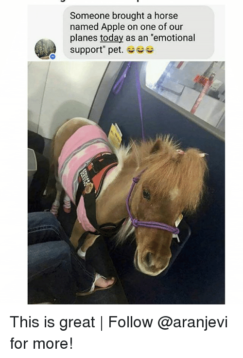 """Apple, Memes, and Horse: Someone brought a horse  named Apple on one of our  planes today as an """"emotional  support"""" pet. This is great 