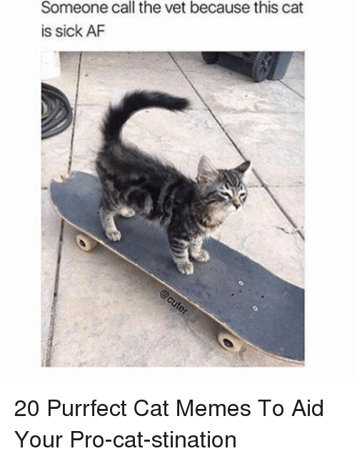Af, Memes, and Pro: Someone call the vet because this cat  is sick AF 20 Purrfect Cat Memes To Aid Your Pro-cat-stination