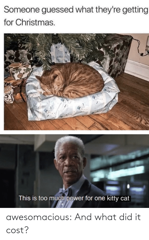 This Is Too Much: Someone guessed what they're getting  for Christmas.  This is too much power for one kitty cat awesomacious:  And what did it cost?