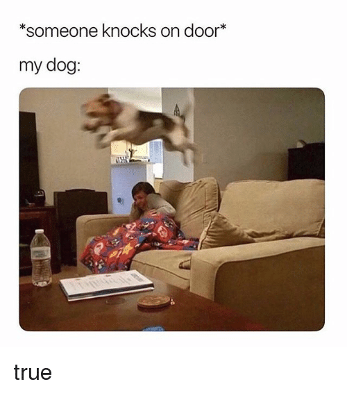 True, Girl Memes, and Dog: someone knocks on door*  my dog: true