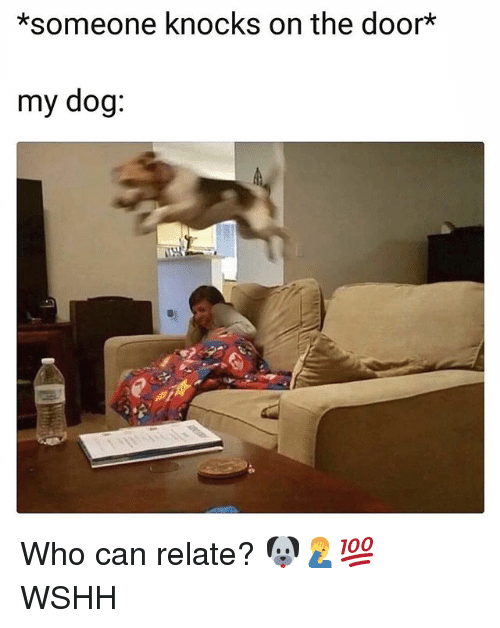 Memes, Wshh, and 🤖: *someone knocks on the door*  my dog: Who can relate? 🐶🤦♂️💯 WSHH