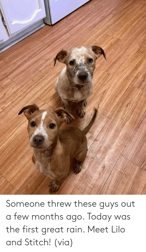 Few: Someone threw these guys out a few months ago. Today was the first great rain. Meet Lilo and Stitch! (via)