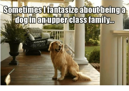 inane: Sometimes I fantasize about being a  dog inan upper class family.