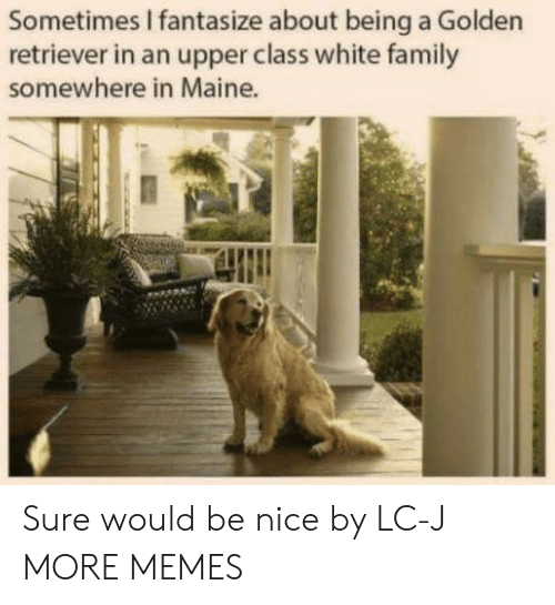 Dank, Family, and Memes: Sometimes I fantasize about being a Golden  retriever in an upper class white family  somewhere in Maine. Sure would be nice by LC-J MORE MEMES