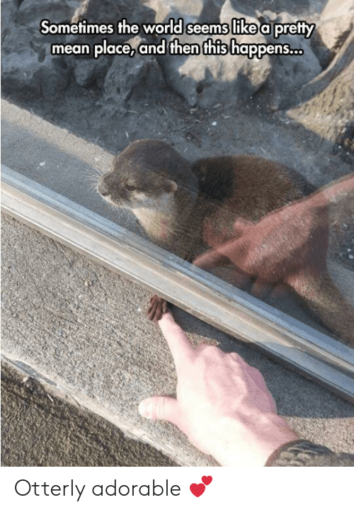 Mean, World, and Adorable: Sometimes the world seems like a pretty  mean place,and then this happens. Otterly adorable 💕