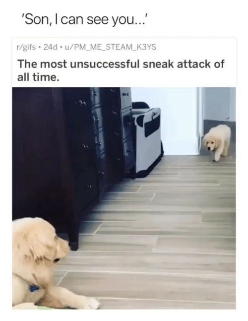 Memes, Steam, and Gifs: 'Son, I can see you...  r/gifs 24d u/PM_ME_STEAM_K3YS  The most unsuccessful sneak attack of  all time.