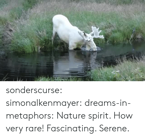 metaphors: sonderscurse: simonalkenmayer:  dreams-in-metaphors: Nature spirit.  How very rare!   Fascinating. Serene.