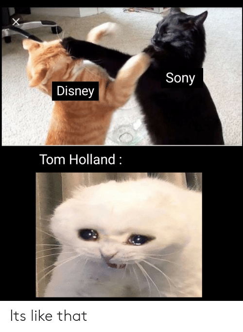 Disney, Sony, and Holland: Sony  Disney  Tom Holland Its like that
