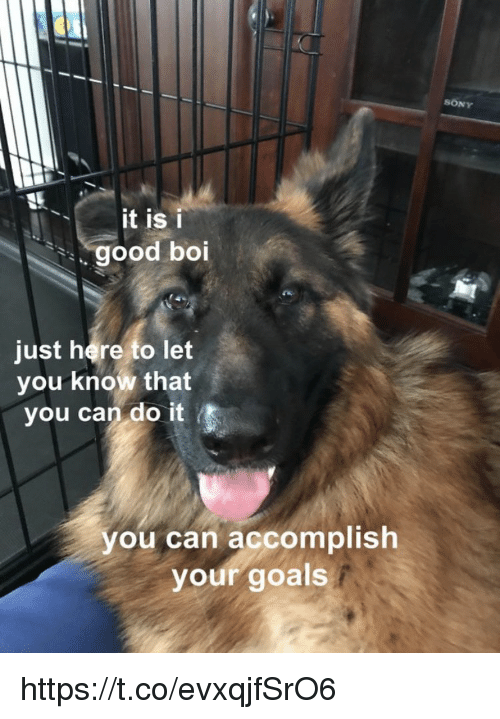 Goals, Memes, and Sony: SONY  it is i  good boi  just here to let  you know that  you can do it  you can accomplish  your goals https://t.co/evxqjfSrO6