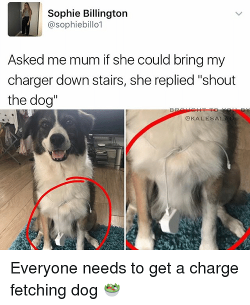 """Memes, 🤖, and Dog: Sophie Billington  @sophiebillo1  Asked me mum if she could bring my  charger down stairs, she replied """"shout  the dog''  OKALES AL. Everyone needs to get a charge fetching dog 🥗"""