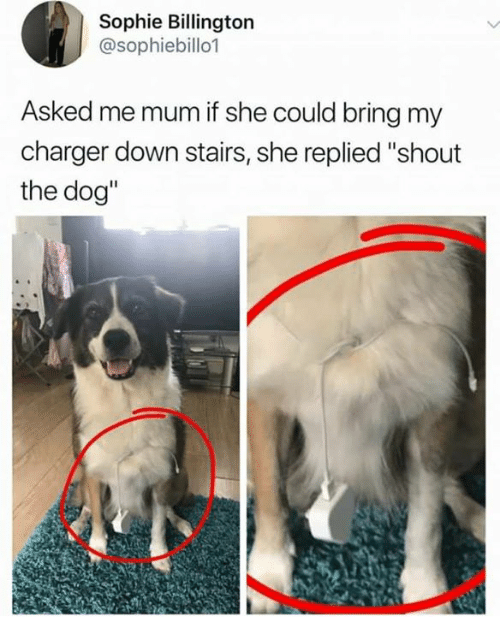 "Humans of Tumblr, Dog, and Charger: Sophie Billington  @sophiebillo1  Asked me mum if she could bring my  charger down stairs, she replied ""shout  the dog"""