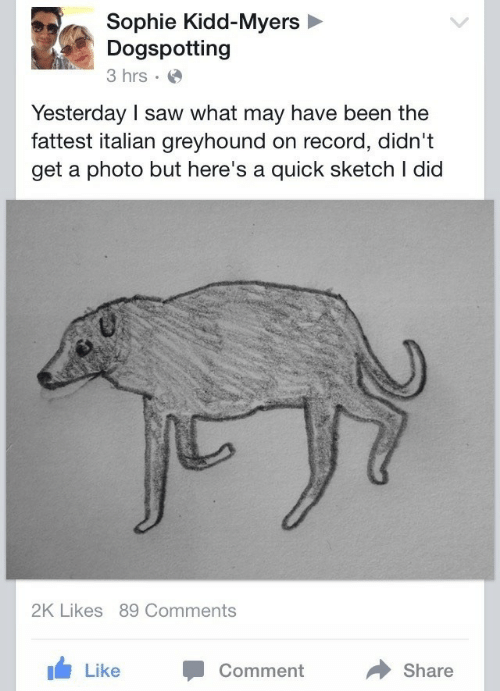 Saw, Record, and Kidd: Sophie Kidd-Myers  Dogspotting  3 hrs  Yesterday I saw what may have been the  fattest italian greyhound on record, didn't  get a photo but here's a quick sketch I dicd  2K Likes 89 Comments  Like Comment  Share