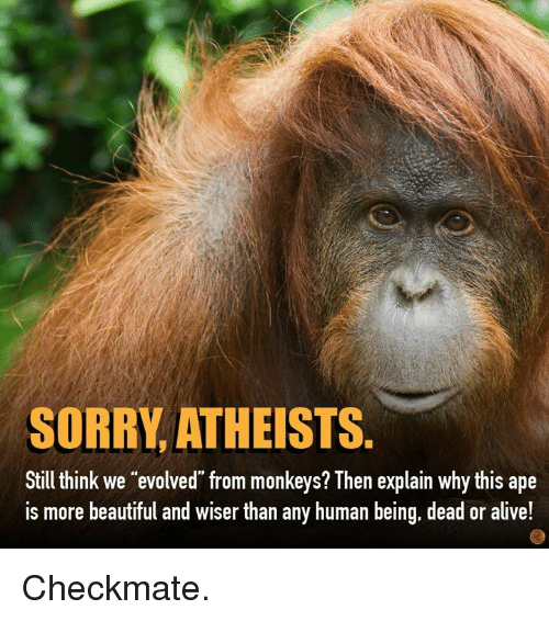 """Alive, Beautiful, and Dank: SORRY, ATHEISTS.  Still think we """"evolved from monkeys? Then explain why this ape  is more beautiful and wiser than any human being, dead or alive! Checkmate."""