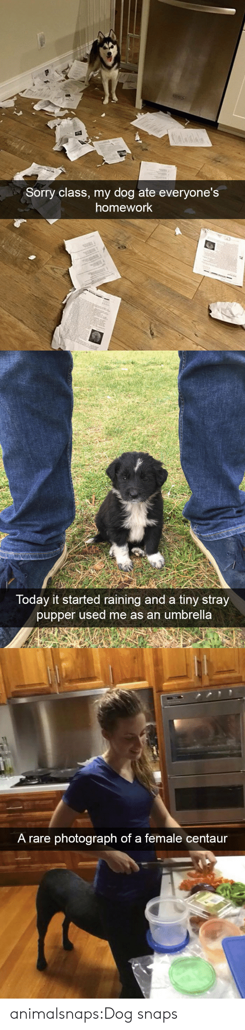 centaur: Sorry class, my dog ate everyone's  homework   Today it started raining and a tiny stray  pupper used me as an umbrella   A rare photograph of a female centaur animalsnaps:Dog snaps