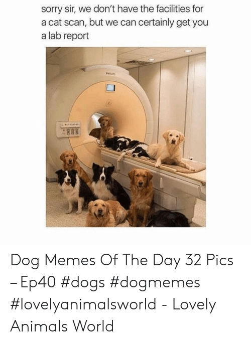 cat scan: sorry sir, we don't have the facilities for  a cat scan, but we can certainly get you  a lab report  . 808 Dog Memes Of The Day 32 Pics – Ep40 #dogs #dogmemes #lovelyanimalsworld - Lovely Animals World