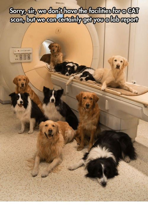 cat scan: Sorry sir wedon't have the facilitiesfor a CAT  scan,but we  can certainlyget you allabreport